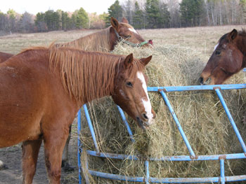 "Winterguide 2005 | view story as a pdf by Stacey Chase ""The Horsey Set"" takes on a whole new meaning at this farm in Biddeford All the pretty horses that dot the […]<!-- AddThis Sharing Buttons below --><!-- AddThis Sharing Buttons below -->"