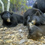 Bears-mothers-day_edited-1