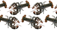 Summerguide 2016